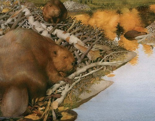 Life in the Boreal Forest-beavers