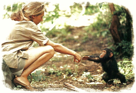 Jane Goodall and chimp