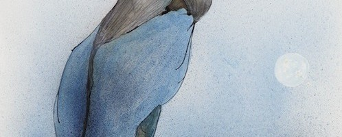 Pallas's Cormorant