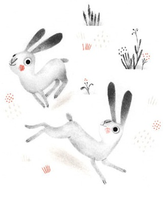 Northern night rabbits
