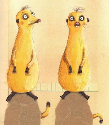 Meerkat details