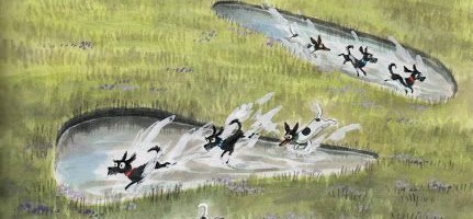Plumdog Blog puddles